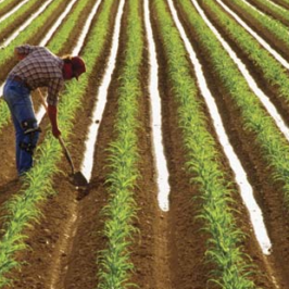 Jobs in Agriculture: Is Farming Work in Decline?