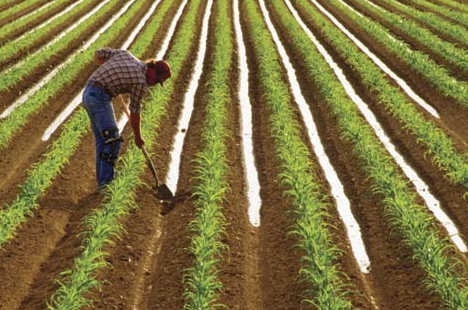 Jobs in Agriculture Is Farming Work in Decline