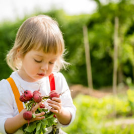 Easy Gardening Projects for Kids and Employees